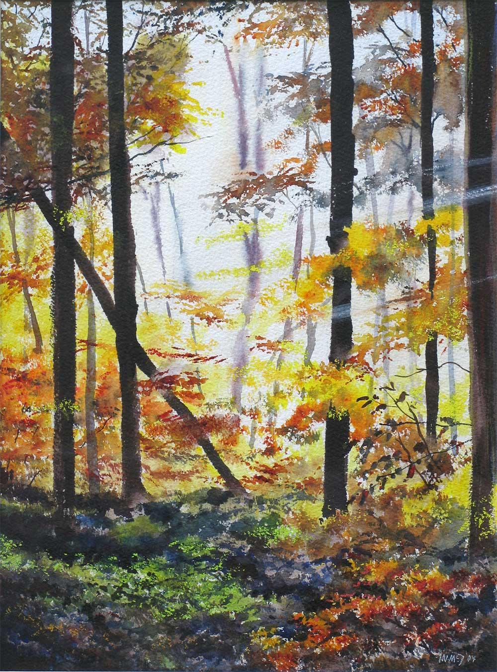 Autumn Light - Haldon Forest